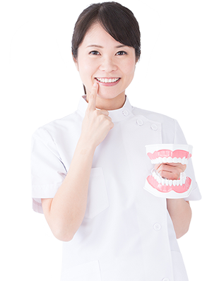 歯の模型を持つ歯科衛生士