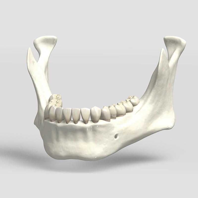 顎の骨イメージ